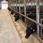 27年度生産費は素畜費かさみ、肥育牛、育成牛が増加