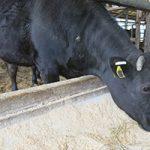 [配合飼料生産量・9月]生産量は前年比2%減の186万5千t