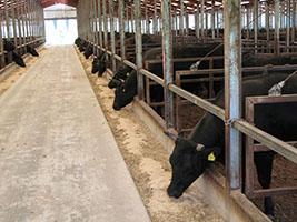 牛マルキン7月、肉専用種の積立金不足は33都道府県に