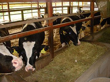 5月牛個体識別総頭数、全国頭数は前年同月比1.5%増