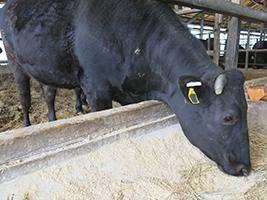 牛マルキン9月、肉専用種は福井県と岐阜県以外で交付