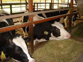 酪肉近と家畜改良増殖目標が適当と答申—畜産部会