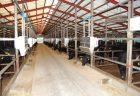 和牛肥育26カ月に短縮でも肉質差ない、温室効果ガス1割超削減