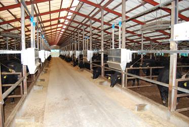 牛マルキン12月、肉専用種は北海道、兵庫県で交付、交雑・乳牛も
